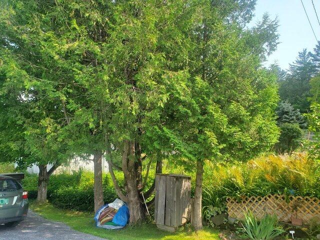 treesbefore.jpg