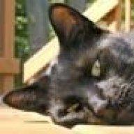 RT-Cat
